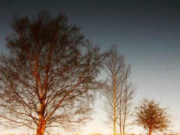 tree reflections2
