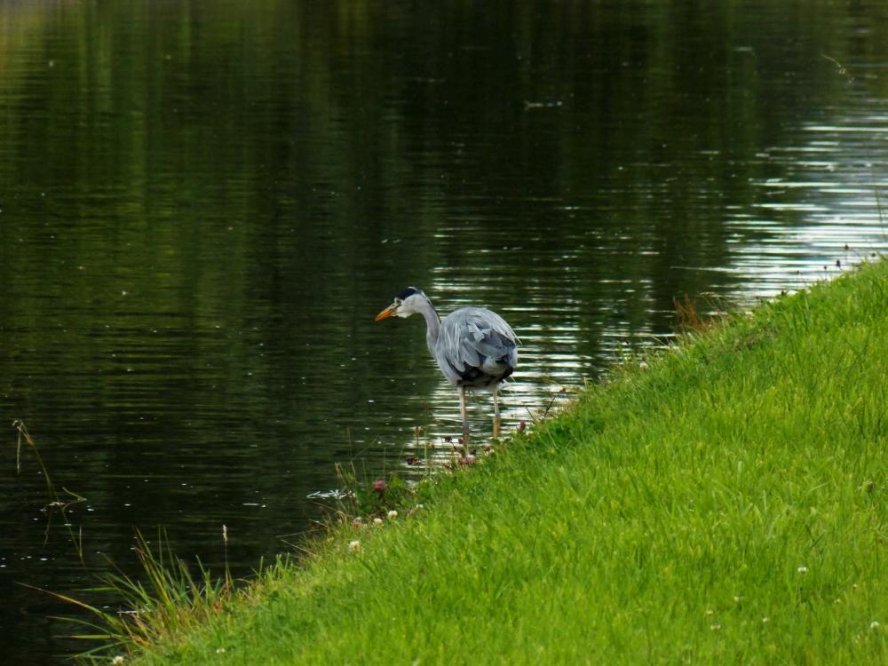 ldpfotoblog_bird 002