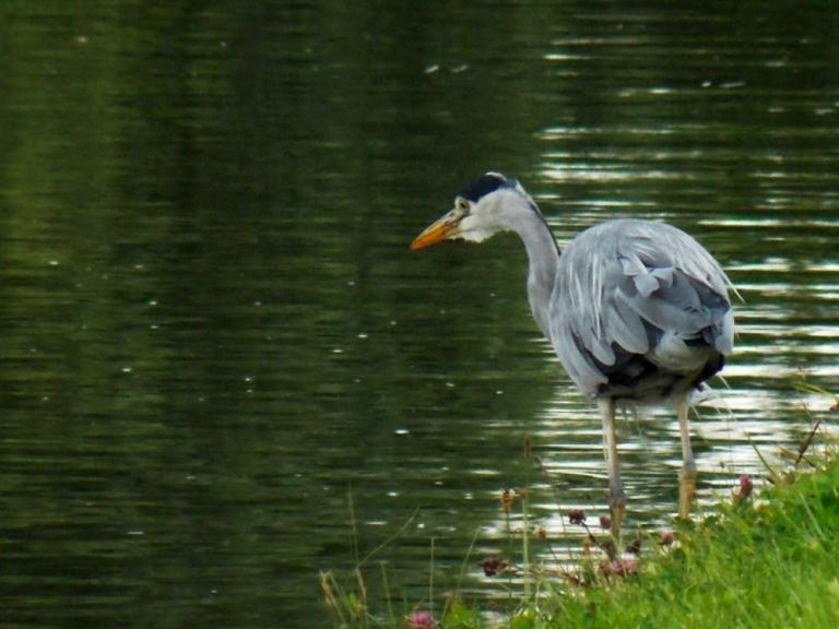 ldpfotoblog_bird 008