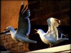 ldpfotoblog_birds july001
