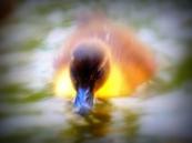 ldpfotoblog_birds july002