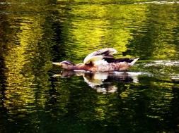 ldpfotoblog_birds july004
