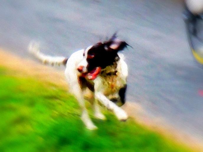 ldpfotoblog_dog 002