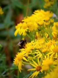 ldpfotoblog_flower 001