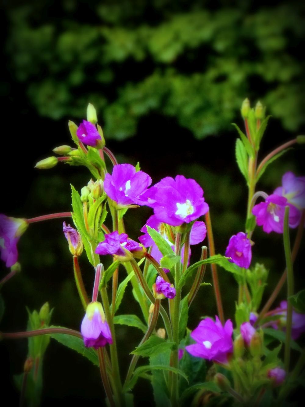 ldpfotoblog_flower 003
