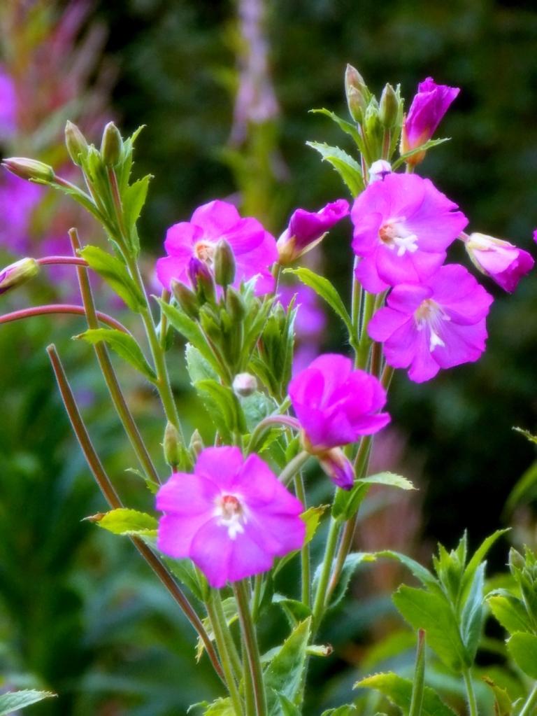 ldpfotoblog_flower 004