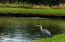 ldpfotoblog_lancashire bird1