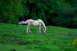DSC_0152re_horses west_021