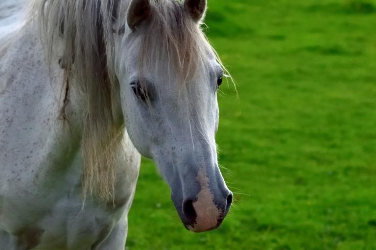 DSC_0221re_horses west_023