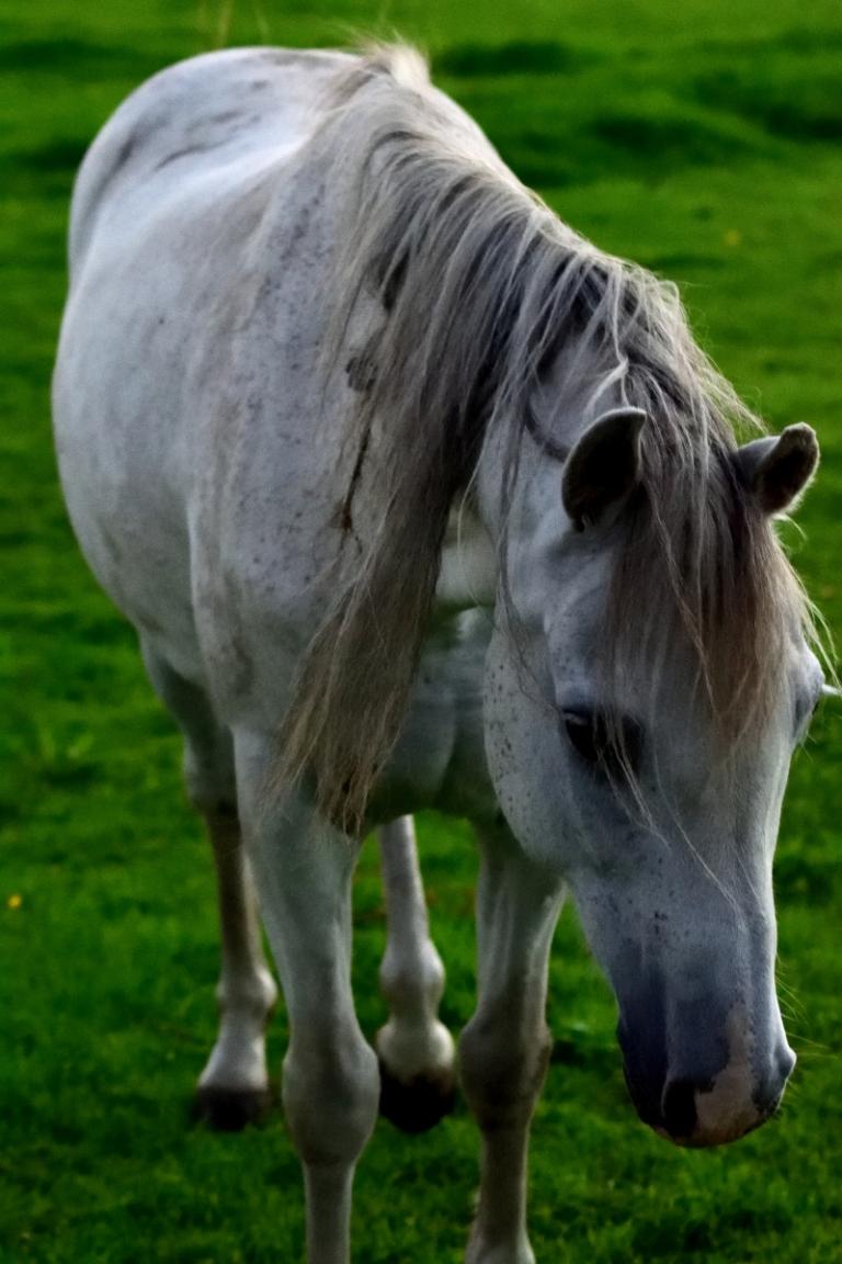 DSC_0223re_horses west_024
