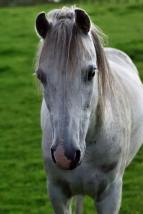 DSC_0229re_white horse_012