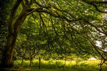 fencetrees2ldp_remake_074