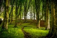 ldp_fencetrees_055
