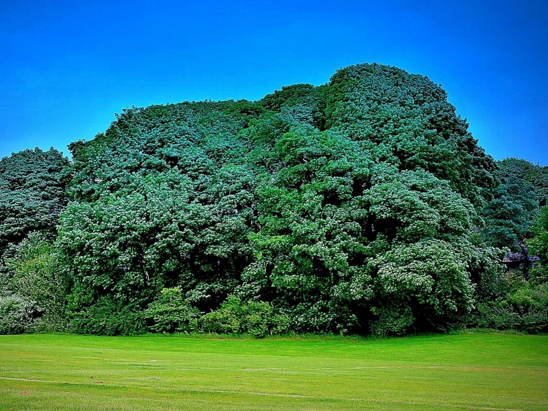 trees test1