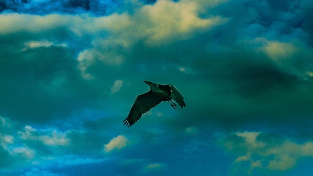 herron_park_sky_ldpfotoblog_web3