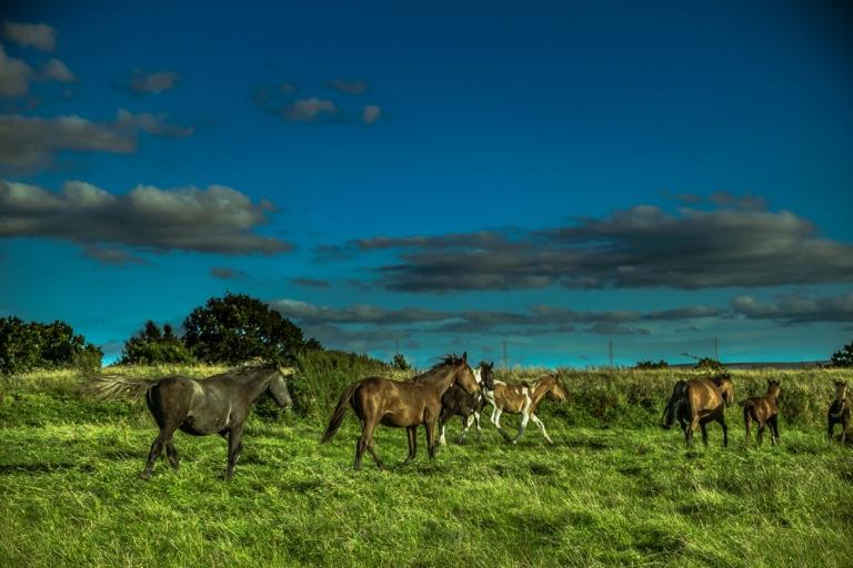 marina_runing_horses-6_web