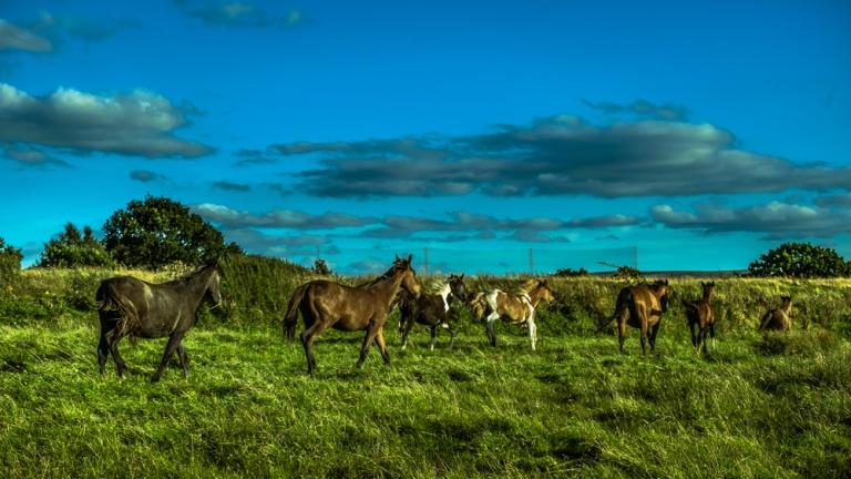 marina_runing_horses-7_web