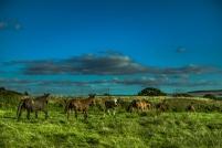 marina_runing_horses-9_web