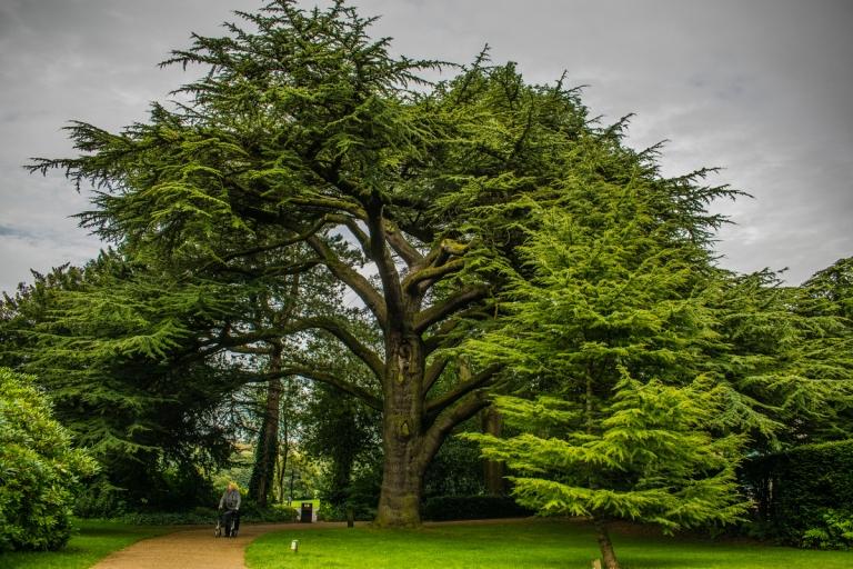 townleyhall_tree_ldpfotoblog_web