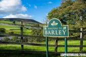 barleysunny-3