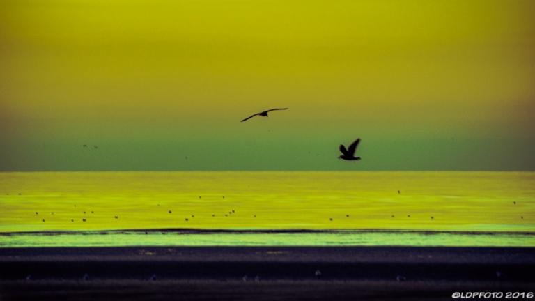 blackpool_seagull_sundown_ldpfotoblog-2