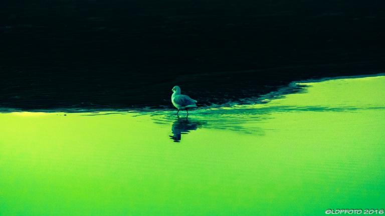 blackpool_seagull_sundown_ldpfotoblog-3