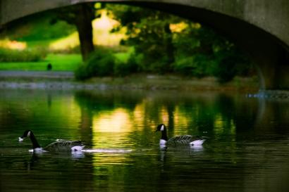 thomson-park_water_birds2-2web