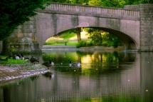 thomson-park_water_birds2web