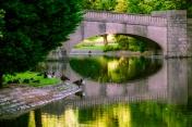 thomson-park_water_birds_web