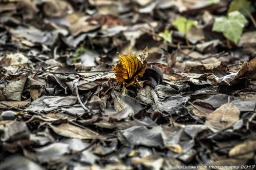 autumnleaveslucaspuch