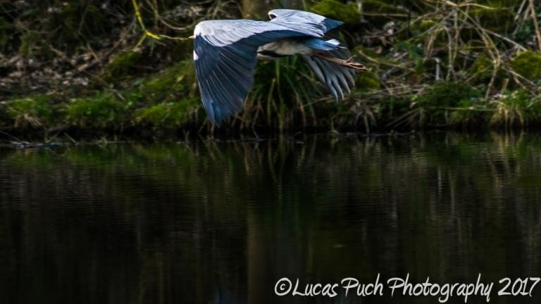 april_1_nature_canal_ldpfotoblog-5