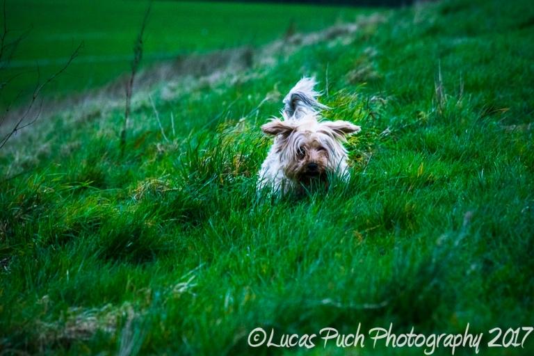 doginthegrass_ldpfotoblog