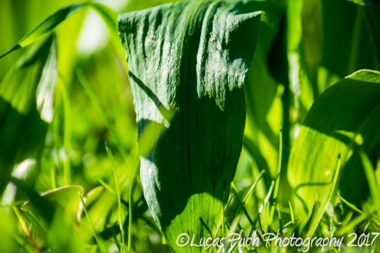 inthegrassmakro_ldpfotoblog-11