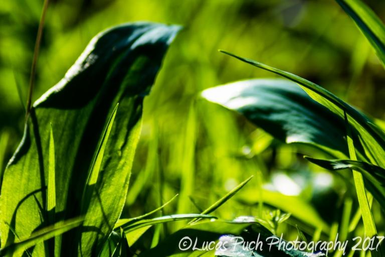 inthegrassmakro_ldpfotoblog-3