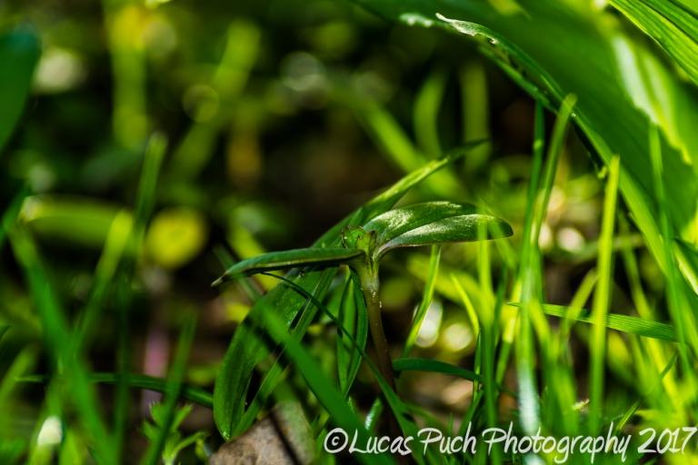 inthegrassmakro_ldpfotoblog-7