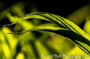 inthegrassmakro_ldpfotoblog-9