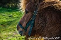 Mini Horse part1