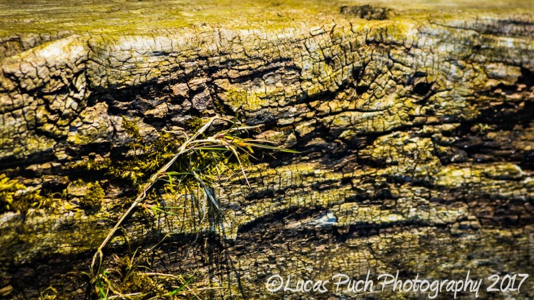 Old tree bark_lucaspuch_web