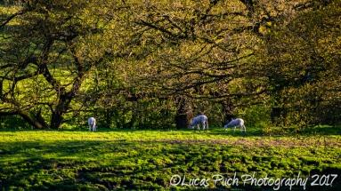 springtimelancashire _lucaspuchweb-11