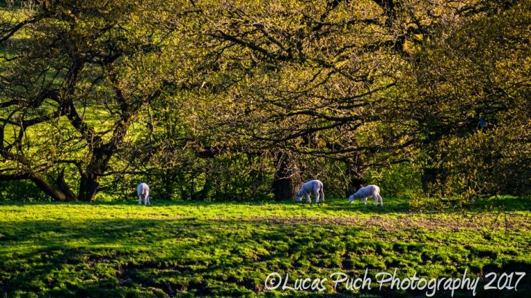 springtimelancashire _lucaspuchweb-11.jpg