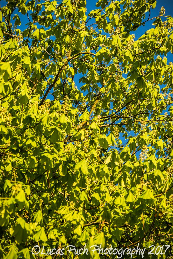 springtimelancashire _lucaspuchweb-17.jpg