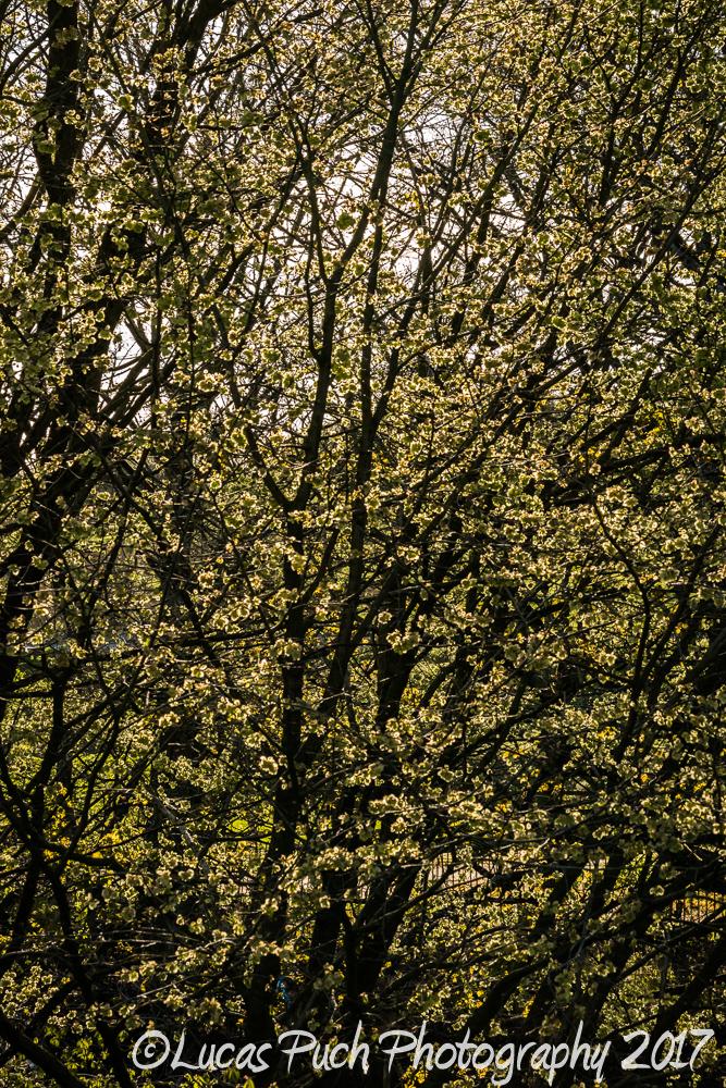 springtimelancashire _lucaspuchweb-2.jpg