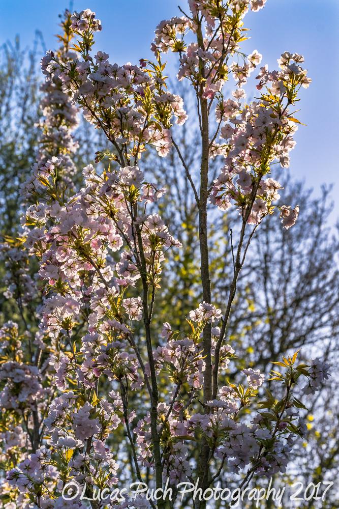springtimelancashire _lucaspuchweb-3.jpg