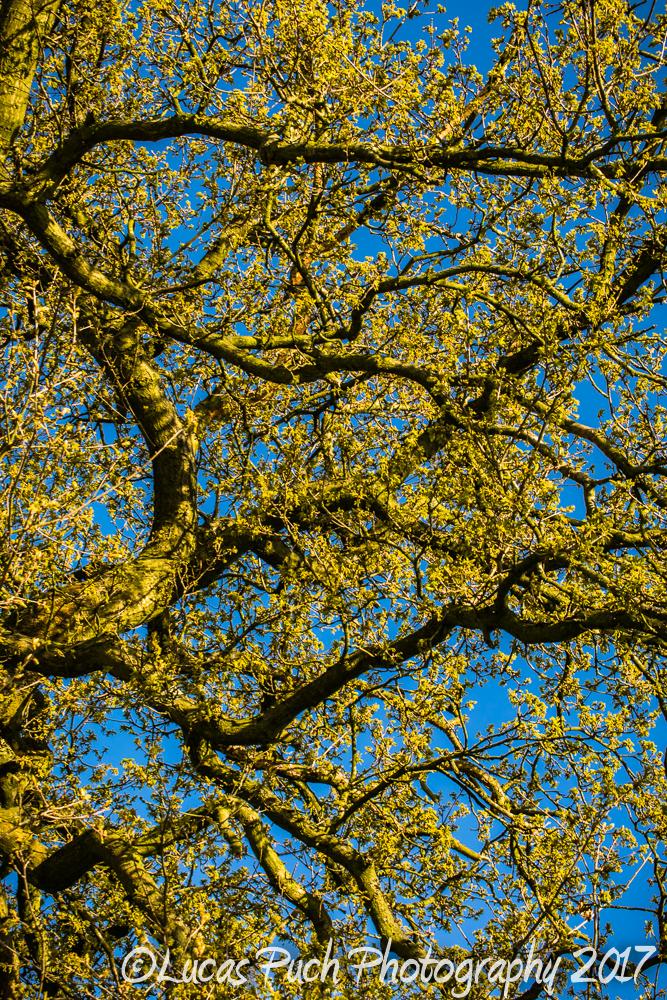 springtimelancashire _lucaspuchweb-4.jpg